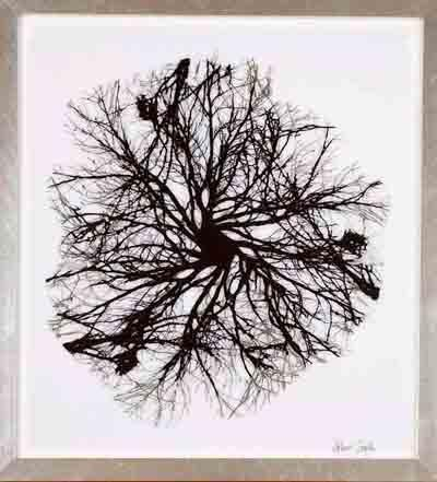 transferencia s. metacrilato, 65x65cm | Ir a la ficha del Artista 'Helena Zapke Rodriguez'