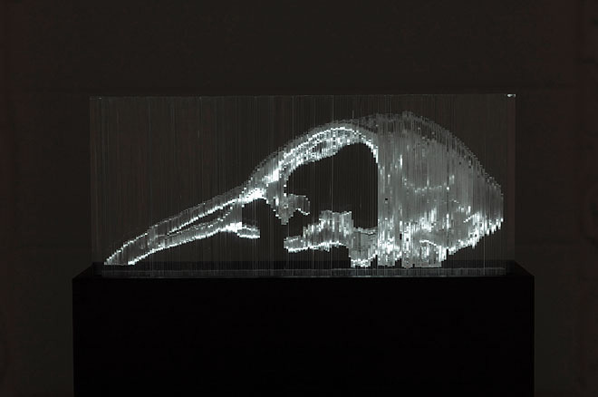 Turdus 170, 2009 - plexiglass