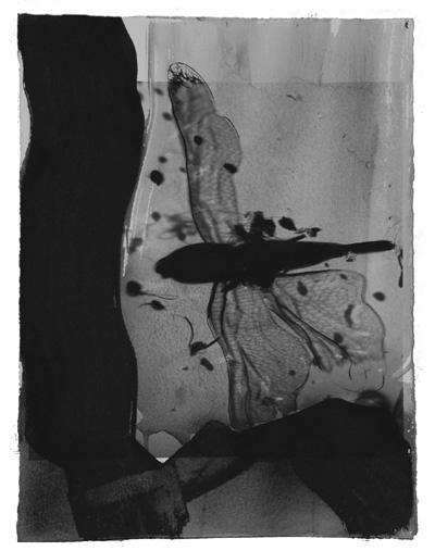 Francesca Marti.Dragonfly.2006.60x50.Tecnica mixta