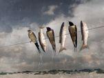 Espeto de golondrinas con sardinas. Ernesto Arroyo