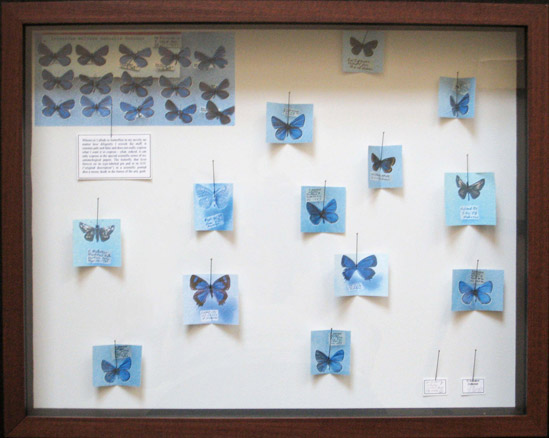 Barbara Bloom, Nabokov Butterfly Boxes, 1998-2008
