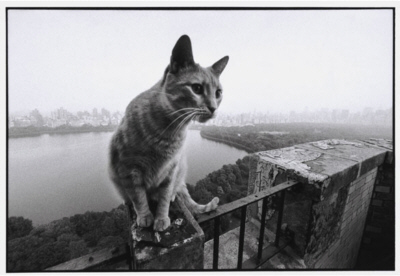Cat on terrace over-looking lake and park