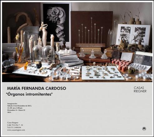 María Fernanda Cardoso, Órganos intromitentes