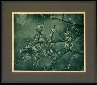 Tomás de Aciliona. Almendro en flor, c. 1933 © TOMÁS DE ACILIONA – Cortesía de PHotoEspaña