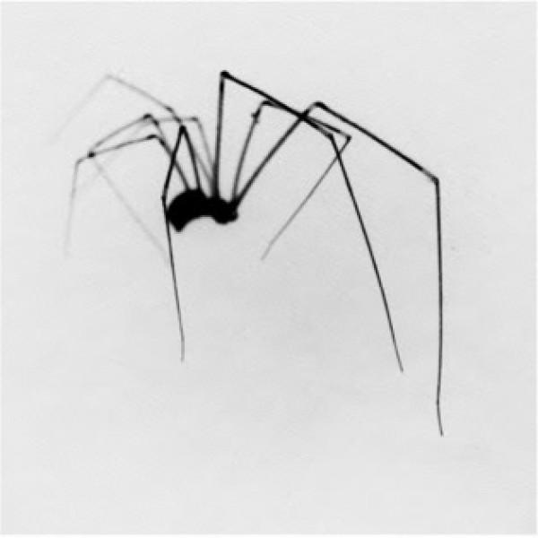 Christopher Taylor, Sèrie Arthropoda, 1999