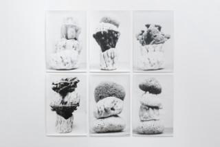 Jochen Lempert – Cortesía del Centro de Arte Dos de Mayo