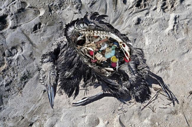 Plástico. Foto. Foto Paulo Oliveira — Cortesía de Tania Castro