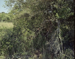 Reserva, de Gerard Ortín, Espai 13. © Fundació Joan Miró.