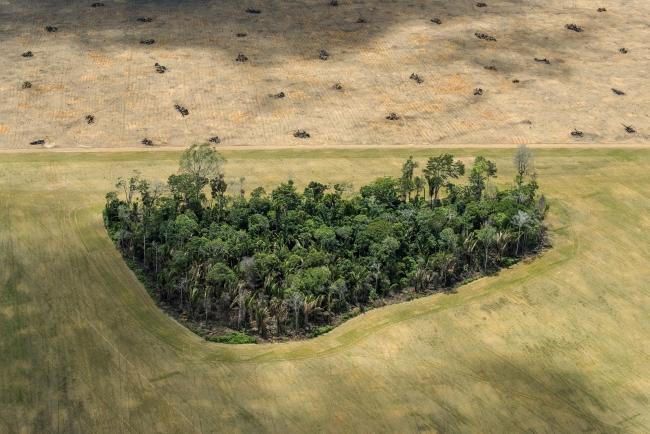 Amazon: Paradise Threatened © Daniel Beltrá – Cortesía de World Press Photo | Ir al evento: 'World Press Photo 2018'. Premio de Fotografía