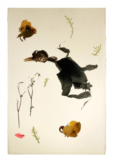 TRATADO DE BOTÁNICA APLICADA | Ir al evento: 'Tratado de botánica aplicada'. Exposición de Pintura en Moret Art / A Coruña, España