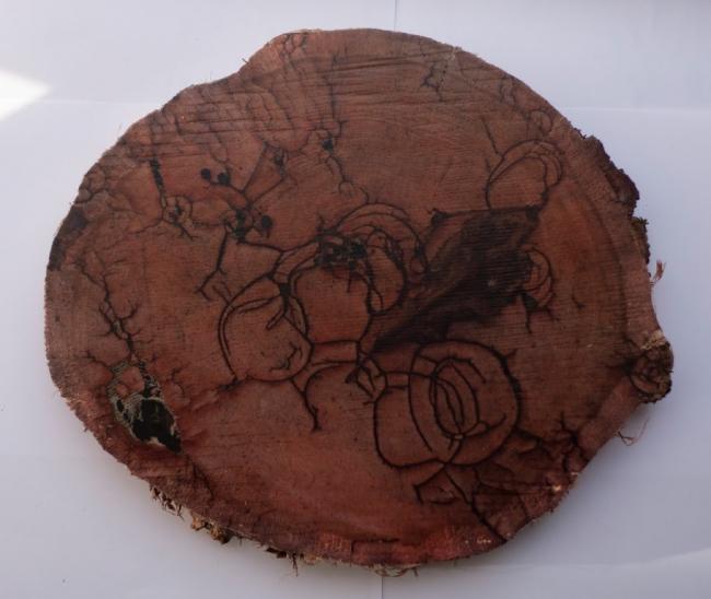 Karlos Kaplan, Naturaleza Muerta, Serie Ruptura, 2017. Fotografía, transferencia sobre madera, 27,5 x 31,5 cm. Pieza única – Cortesía de la Galería Acanto