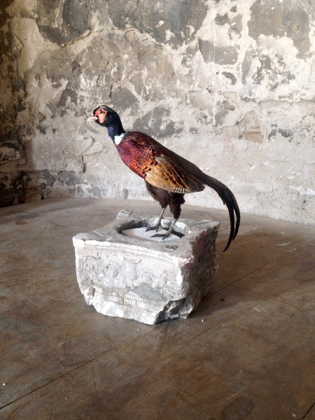 pheasants 2 | Ir al evento: 'Flopsy'. Exposición en Untitled BCN / Barcelona, España