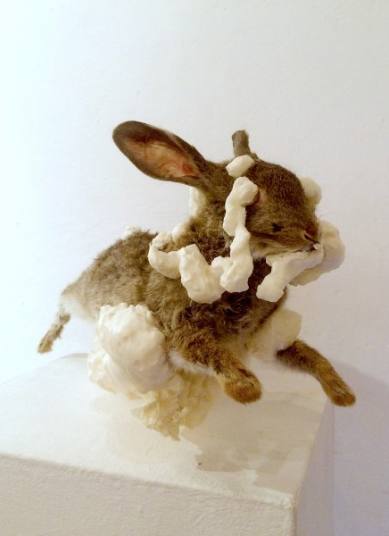 this rabbit edited | Ir al evento: 'Flopsy'. Exposición en Untitled BCN / Barcelona, España