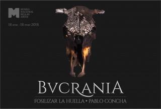 Bucrania