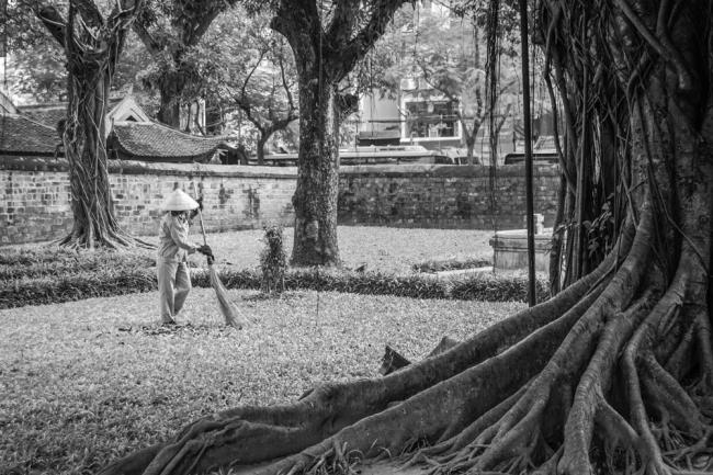 """Fernando Pérez Moreno, Jardines de otoño de la serie """"Trabajadores vietnamitas"""" – Cortesía de Fotonoviembre 2017"""