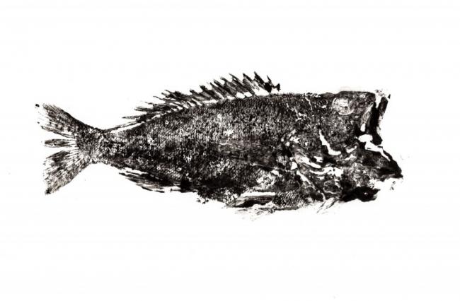 Gyotaku. Imagen cortesía La Cerverina d'Art