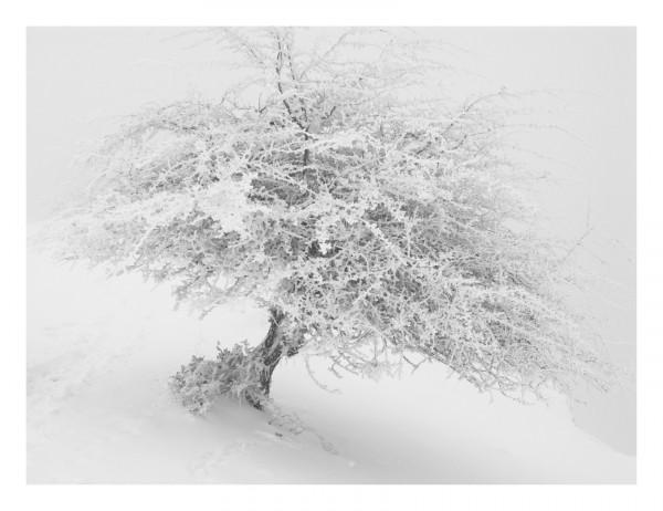 Imanol Marrodán, Frozen Trees