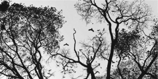 Variaciones de pájaros 4 fotografías 10 x 15 cm / 1 fotografía 40 x 50 cm / 2 fotografías 40 x 26 cm  Negativo 35 mm transferido a impresión por chorro de tinta sobre papel archivo  2014