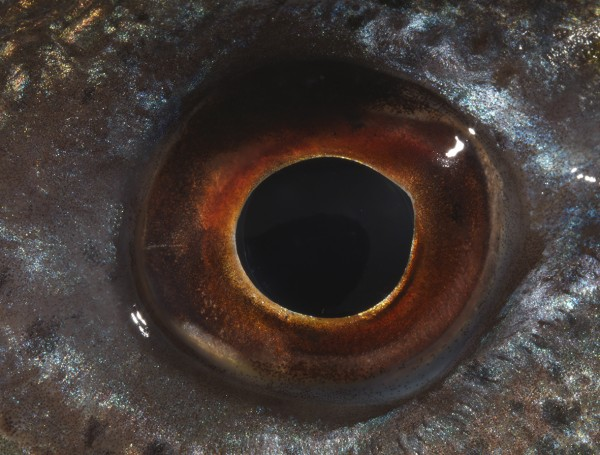 BRUNA ESPOSITO, Eye, 2016, photography, 136 x 180 cm. Unique edition. Courtesy FL Gallery