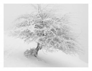 Imanol Marrodan, Frozen tree 1 , 2003-2014. ©Imanol Marrodán, VEGAP, Madrid, 2015