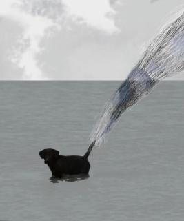 ©Jaime Compairé. El último perro del mediterraneo