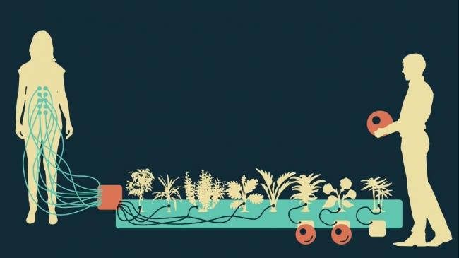 Esquema The Plant Sense_ María Castellanos y Alberto Valverde – Cortesía de LABoral Centro de Arte y Creación Industrial