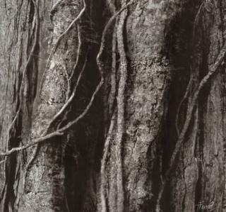 Tania Ferrão – Cortesía de Arte Periférica