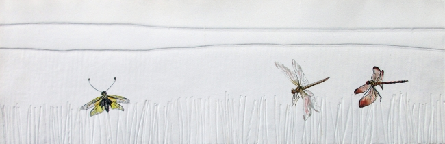 Julia Gallego, Mosca búho y libélulas, 20x60 cm. — Cortesía del Museo Nacional de Ciencias Naturales