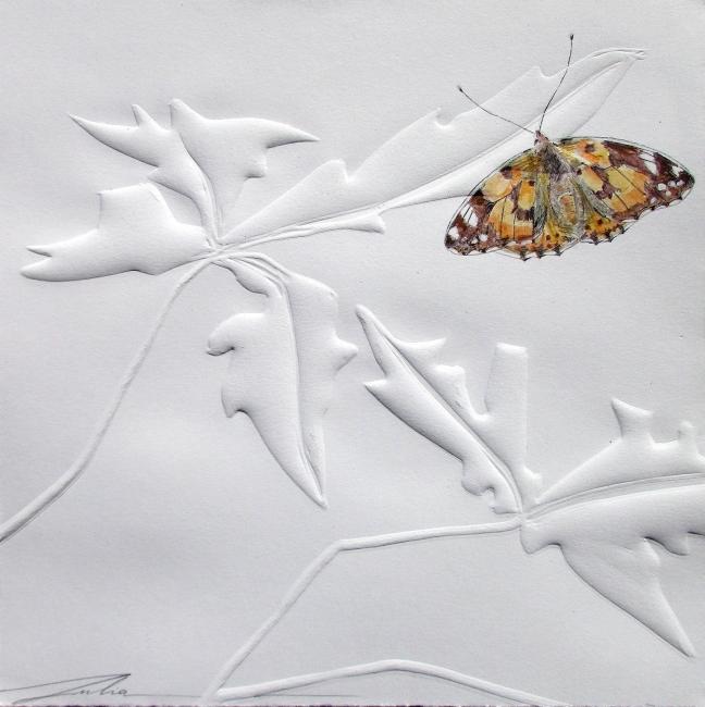 Julia Gallego, Mariposa caldera, 20x20 cm. — Cortesía del Museo Nacional de Ciencias Naturales