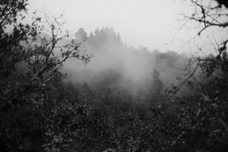 Laia Abril. Lobismuller — Cortesía de AFOGRA (Asociación Fotográfica Granadina)