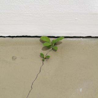 Suda Yoshihiro, Weeds, 2008