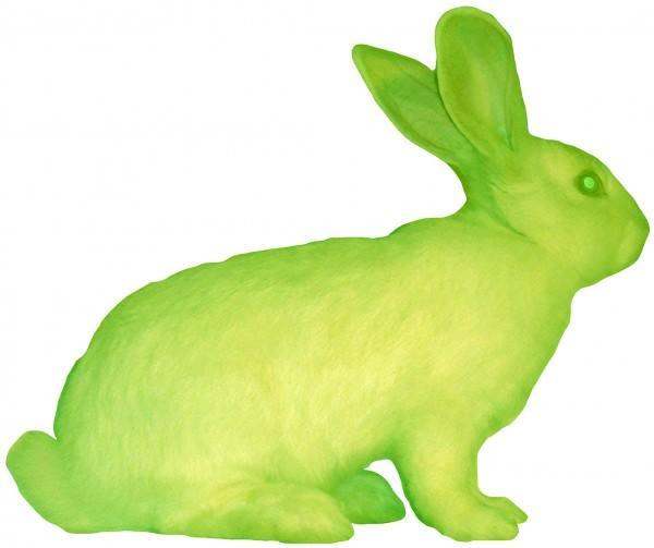 GFP Bunny \'Alba\'