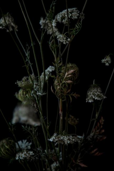 Las Silvestres . 120 x 60 cm