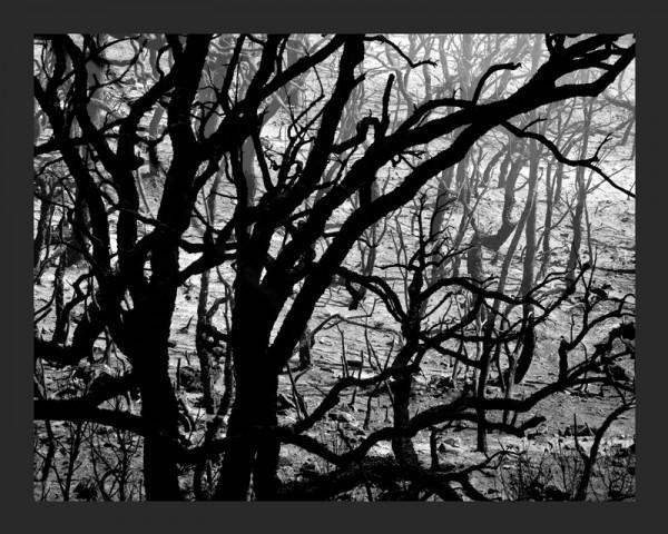 El silencio calcinado, 2015 | Ir a la ficha del Artista, Gestor cultural 'José Miguel Negro Macho'