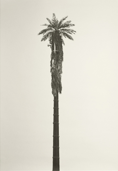 Flora Nativa, serie fotográfica