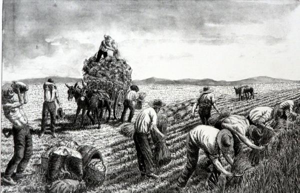 Obra de Julián de Campos Carrero