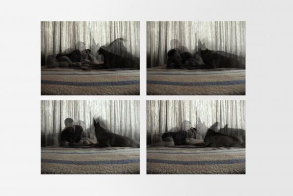 Animal companion. 2013
